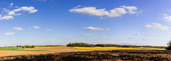 Panoramic Butterweed (Explored)