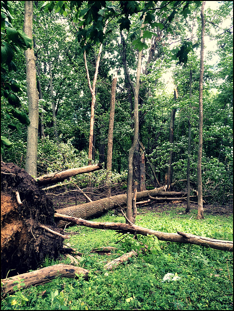A tree falls in the forest, and there's nobody around to hear, does it make a sound?