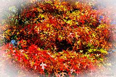Bouquet d'automne….