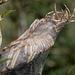 20140908 4913VRAw [NL] Gartenkreuzspinnennest, Terschelling