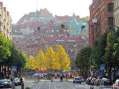 Early autumn colours - Linné