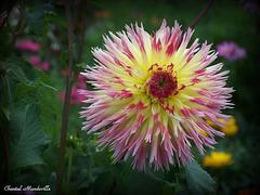 Belles Fleurs... (09)