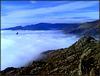 Vulture and fog, below Cancho Largo, La Sierra de La Cabrera. H. A. N. W. E. everybody!