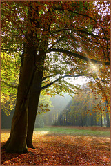 Autumn Scenery in the Park...
