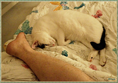 Legs, in the still of the night  ヅ (with PIP)