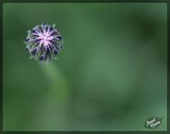 292/366: Alien or Dandelion Bud? [+1 in a note]