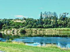 View across the Waikato.
