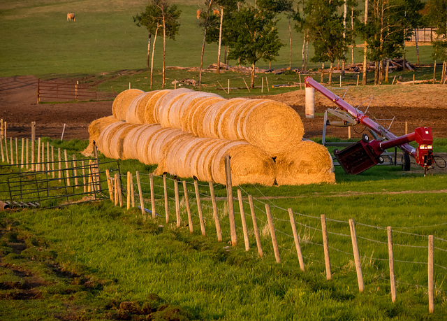 Farm Scene in Late Light