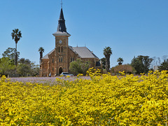 Spring flowers, Nieuwoudtville, Namaqualand, South Africa