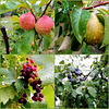 Collage of fruits and raindrops