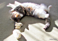 Honey and Her Toys.
