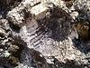 Fossiliferous outcrop.