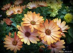 Belles Fleurs... (14)
