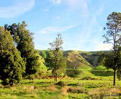 Pleasant Pastures.