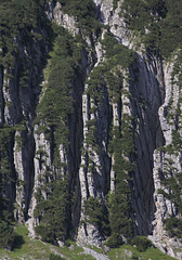 Vertically structured Cliff Face / Laengs gerippte Felswand