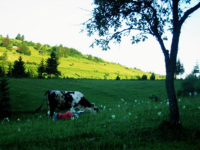 The shepherdess's rest