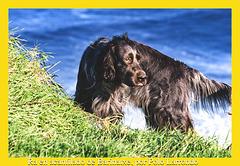 Mi perro Ra, con cresta sobre acantilado de Barinatxe