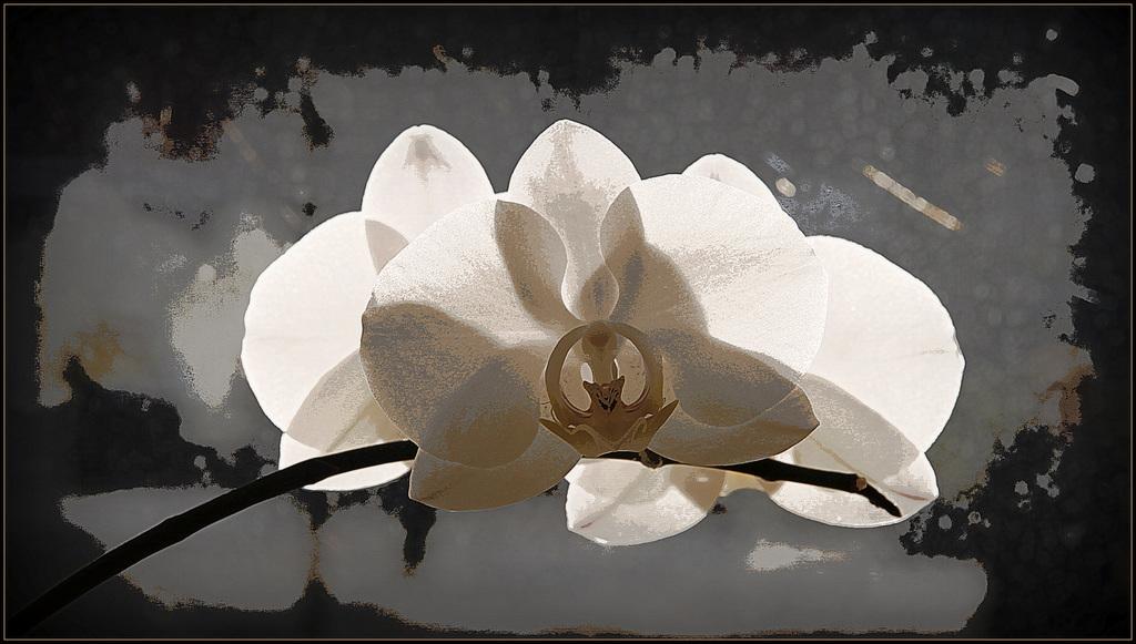 Portrait de fleurs (visions graphiques) 40810578.3eb8d855.1024