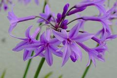 Les fleurs de l'ile en septembre...