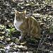 Woodland cat - often seen patrolling the woods