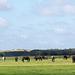 20140908 4905VRAw [NL] Pferde, Terschelling
