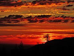 sunset at Sequoia...
