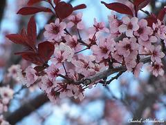 Belles Fleurs... (17)