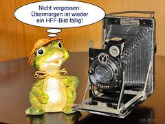 Frosch am Mittwoch (1)