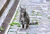 Cartoceto 2017 – Cat