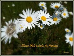 Bonne fête à toutes les mamans .........♥♥♥ ma mère s'appelait Marguerite ♥♥♥