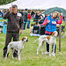Pointer and handlers Cheshire County Show-3648