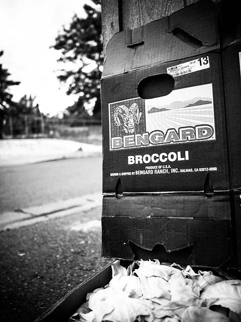 Bengard Broccoli