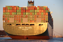 Containerriese Tokyo Triumph