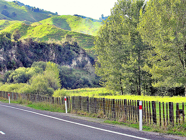 Traveling North From Taumarunui.