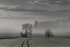 Morning Fog - Morgennebel (180°)