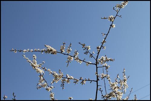 Le temps des prunelliers (6)