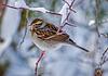 1186712dL · Sparrow