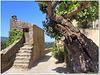 Are stone steps also ok?? HBM