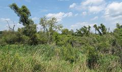 Ideal rural scenery.