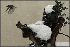 il y a un mois et demi sous la neige ......
