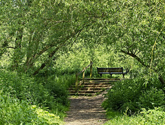 A Bench Under the Tree Canopy