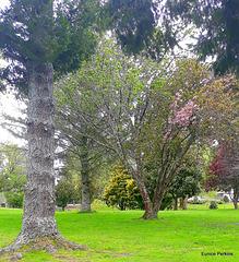 Trees  By Lake Moananui.