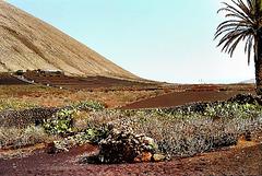 Landschaft bei Tiagua. ©UdoSm