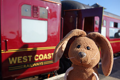 Rabbit boards The Jacobite steam train