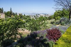 Vistas de la Alhambra y el barrio del Albaicín desde los jardines del Generalife