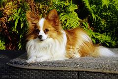 Rocco in de zon