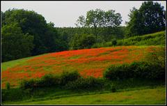 Red pasture