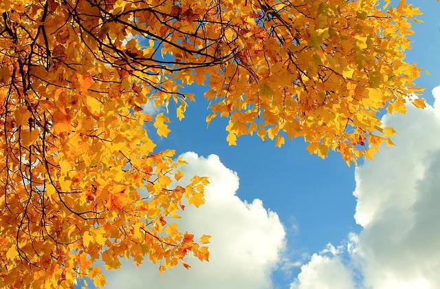 or voici l'automne qui s'installe