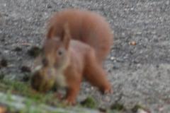 I got me a Walnut 02 cropped