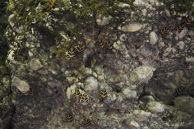Rhodes, A Lot of Butterflies (The Butterfly Valley Park)